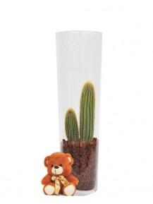 Cactus en jarrón de cristal.