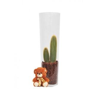 1 Cactus en jarrón de cristal.