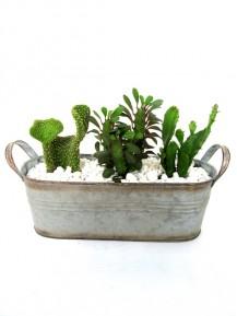 Centro de cactus