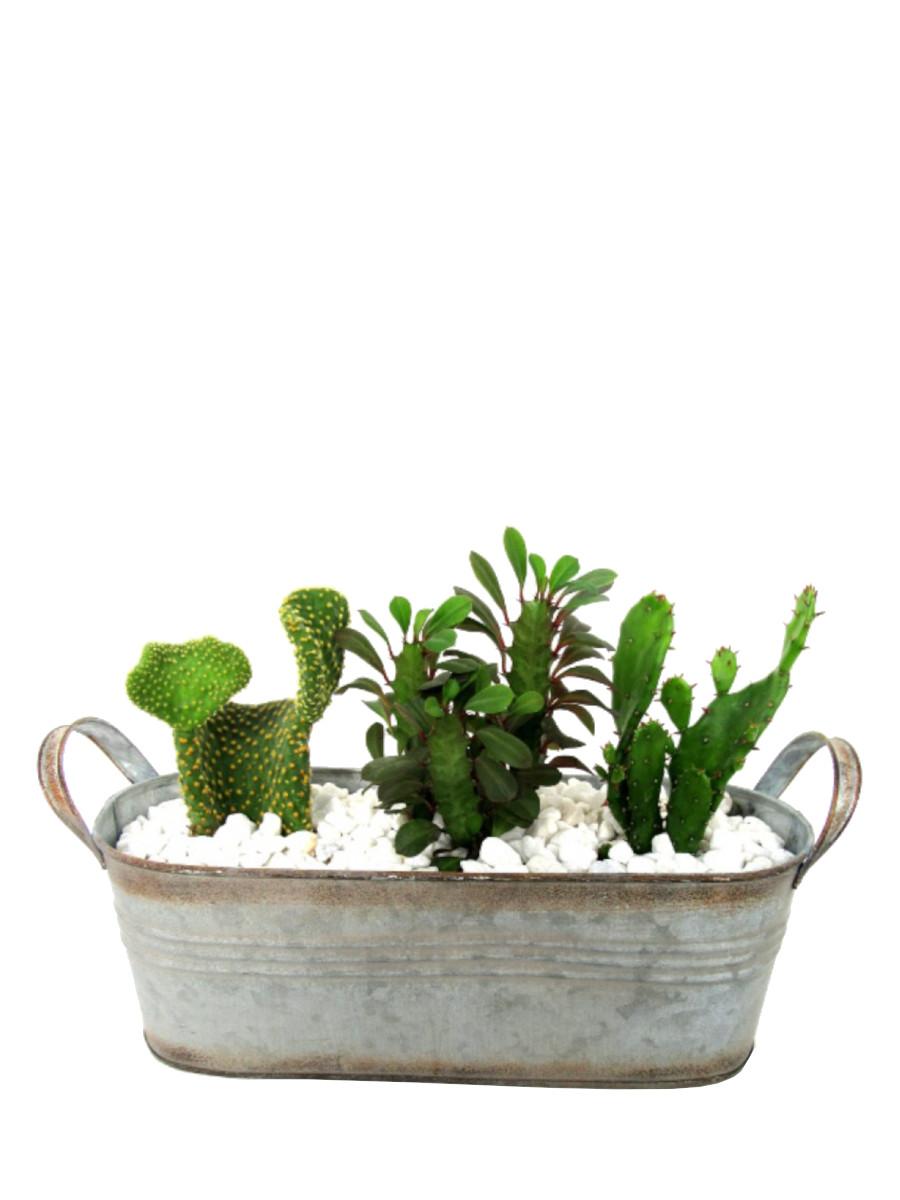 Centro de tres cactus