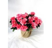1 Azalea rosa decorada