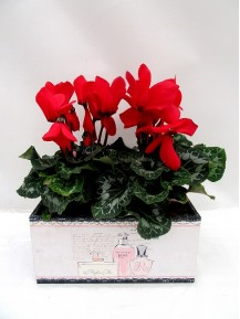 2 cyclamen en caja decorada