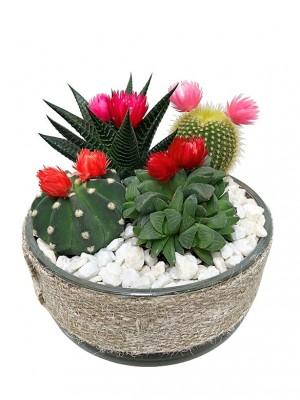Cactus en cristal 01.