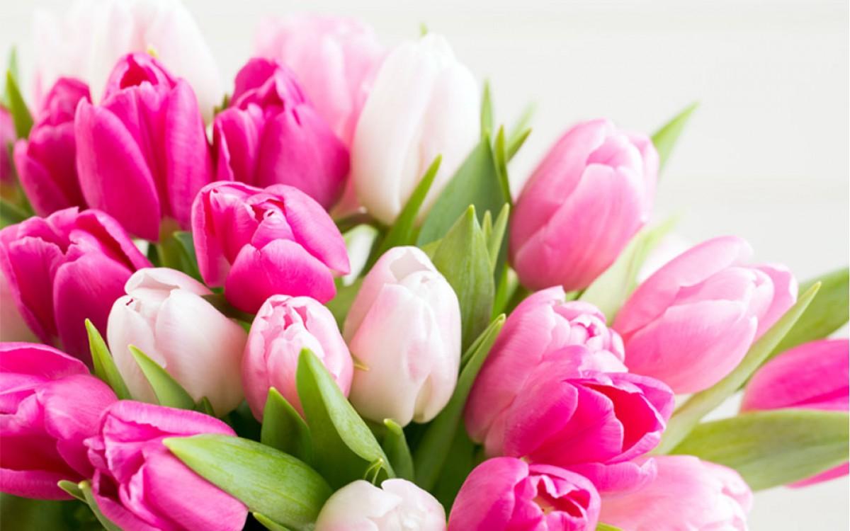 La flor de tulipán, un deleite para los ojos.