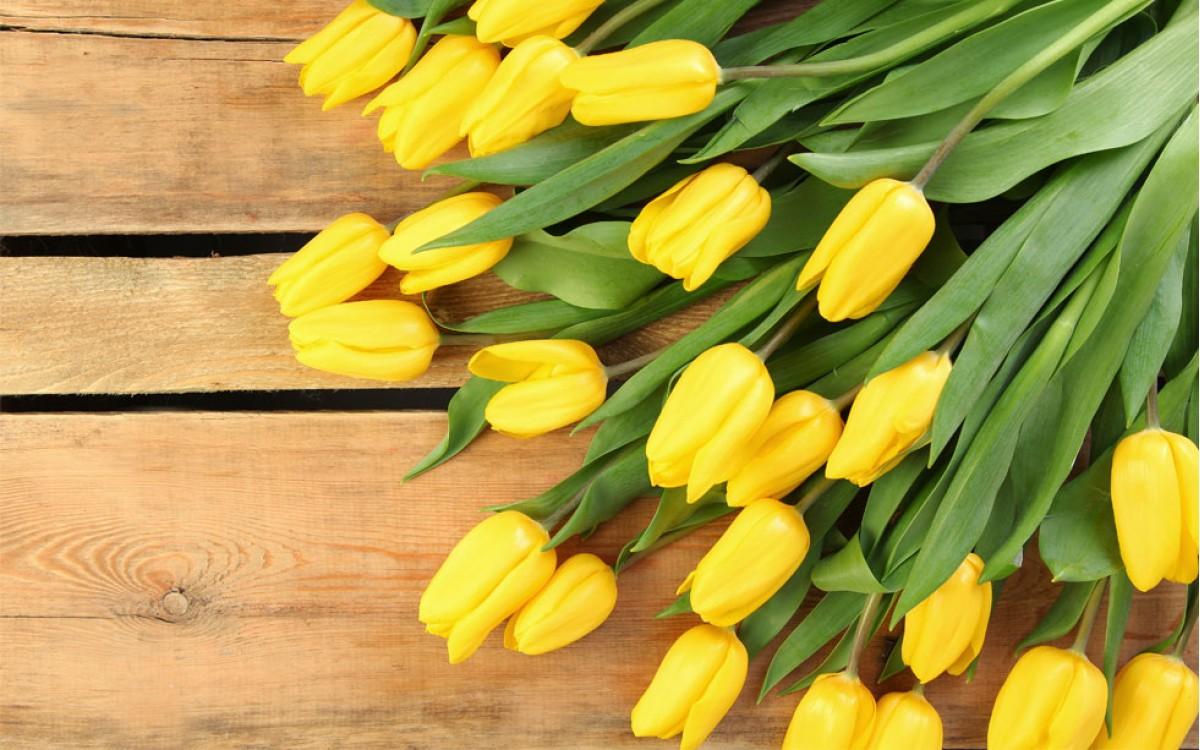 Tulipanes Amarillos | La luz del Sol