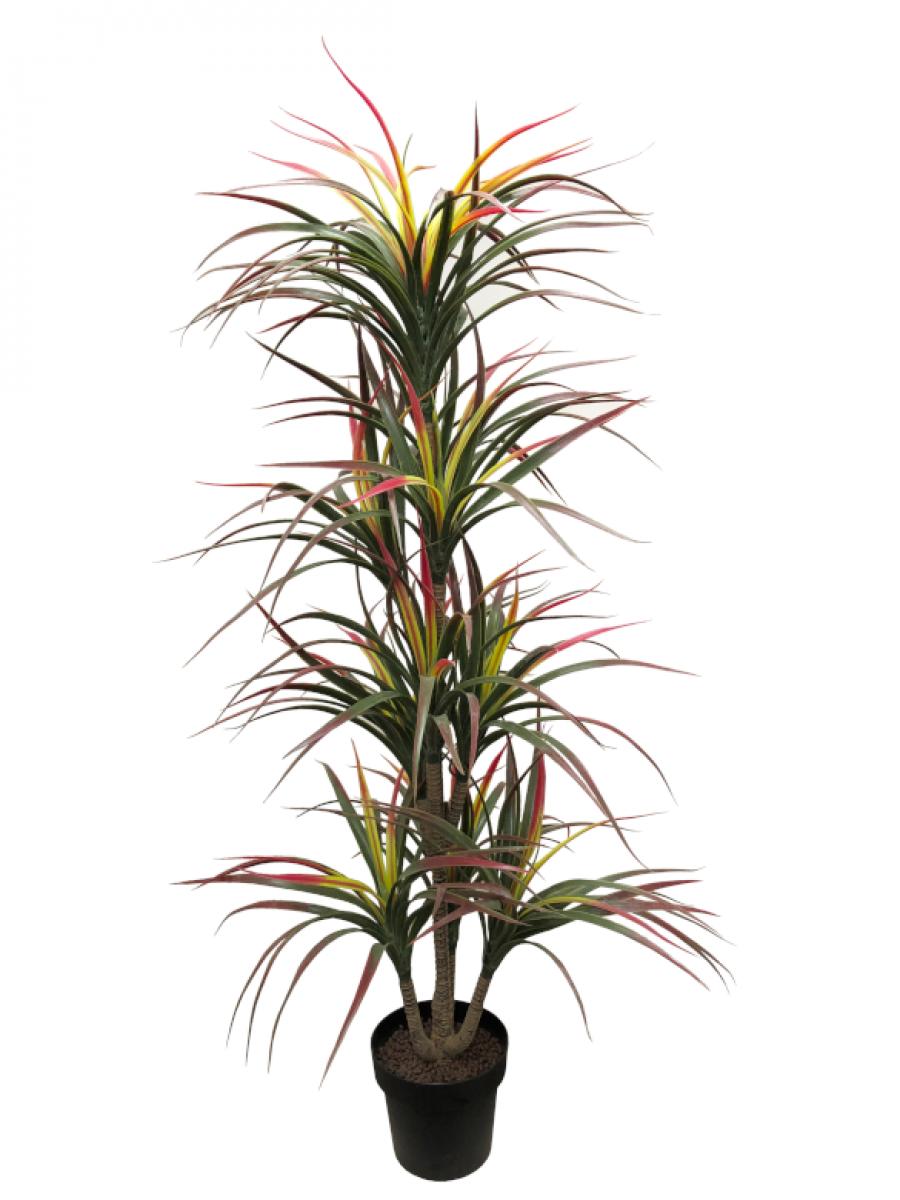 Dracaena tricolor artificial de 1,60 m