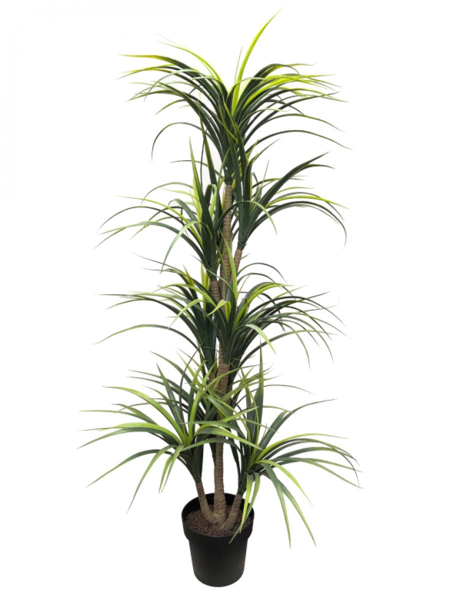 Dracaena bicolor artificial de 1,60 m