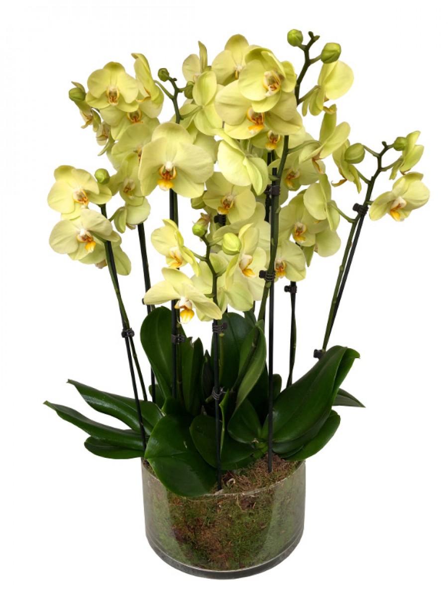 Centro de orquídeas amarillas en cristal