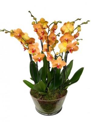 5 orquideas naranjas en vaso cristal