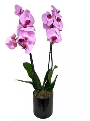 orquidea rosa 2 varas en cristal
