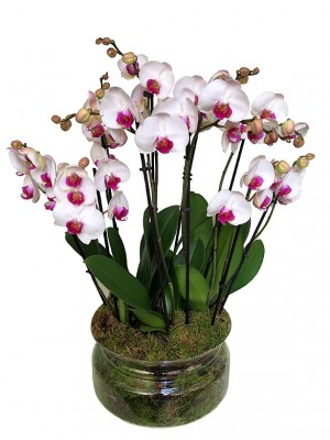 Centro de 4 orquideas blancas  2 vara vaso cristal