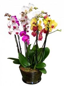 Centro de 5 orquideas variadas en cristal