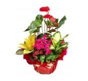 Centro de  flores de pascua