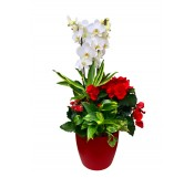 1 Centro de Plantas variadas con orquidea blanca