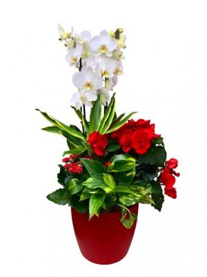 Centro de plantas variadas con orquídea blanca