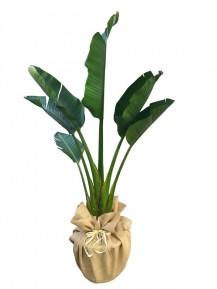Sterlitzia un tallo en arpillera(DISPONIBLE SÓLO PARA MADRID)