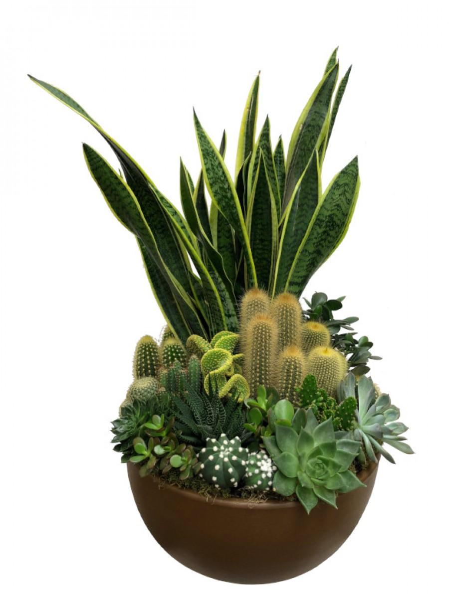 Centro grande de cactus  en cerámica