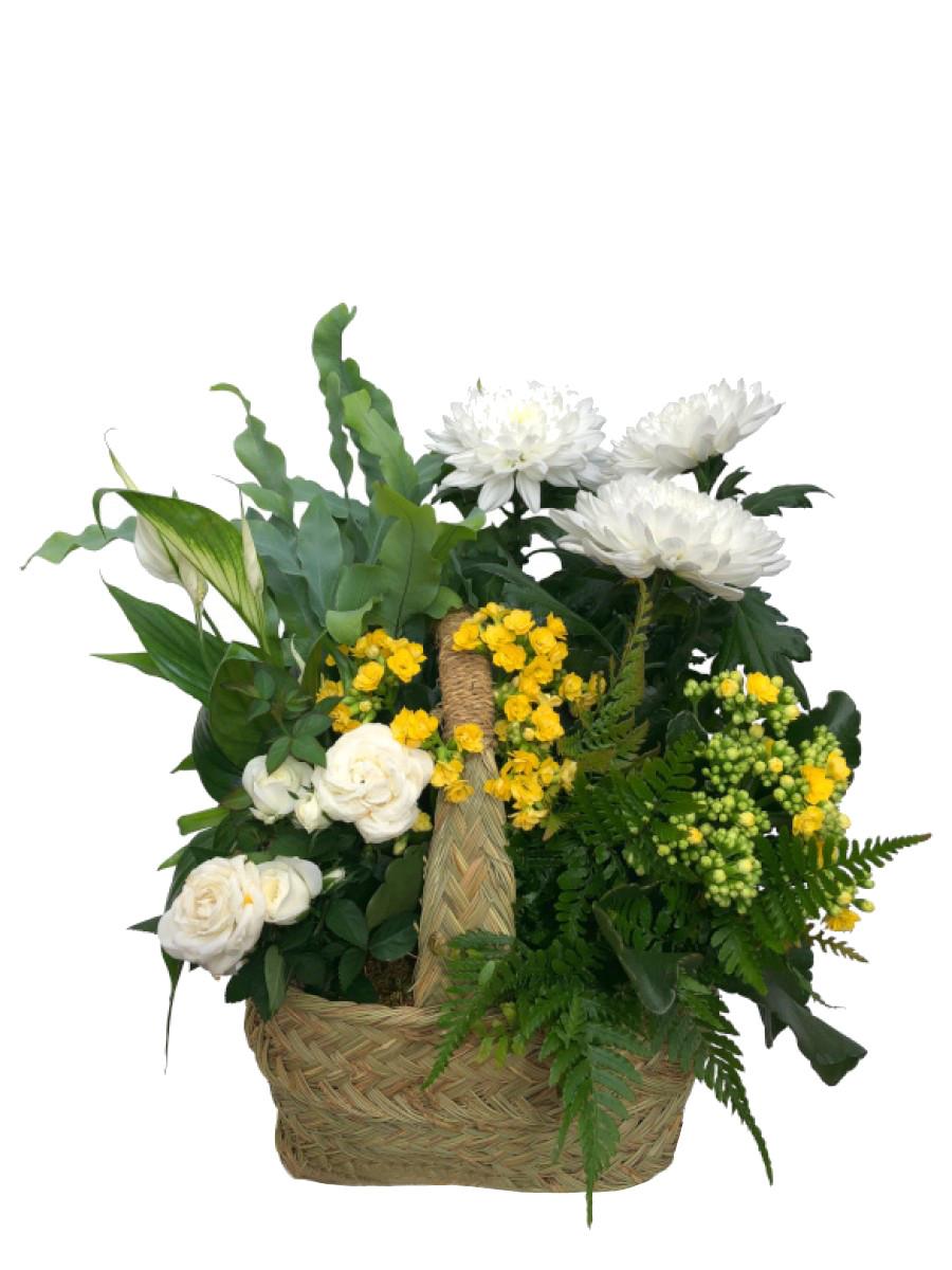 Composición de plantas variadas en cesta de esparto