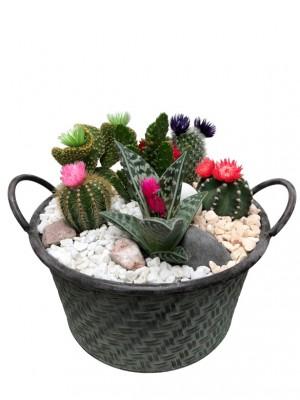 Centro de cactus en laton