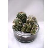 Cactus en jarron de cristal.
