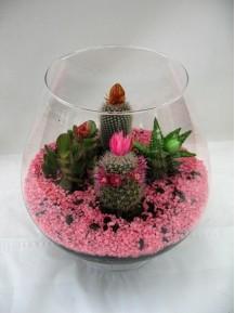Cactus en copa de cristal.