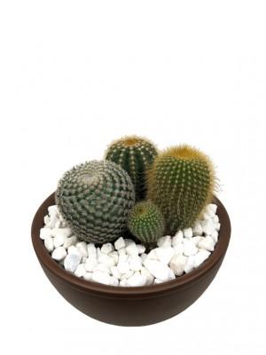 Centro de cactus en cerámica