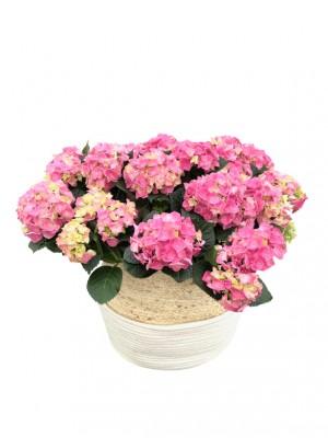 Cesta grande rafia de hortensias rosas