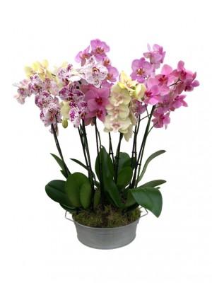 Orquideas colores variados en latón