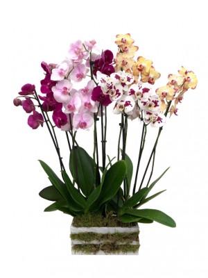 Orquideas colores variados en madera