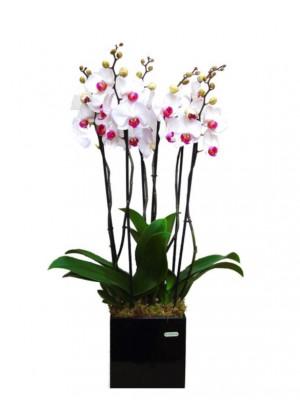 Centro de orquídeas blancas en maceta decorativa