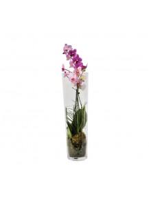 Orquidea cilindro de cristal
