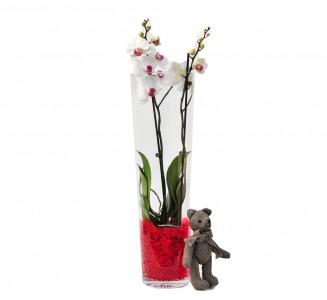 Orquidea cilindro gel 60 cm