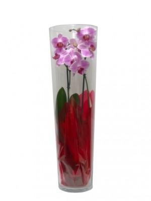 Orquidea cilindro  60 cm