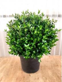 Arbustos - Plantas de exterior resistentes al frio y calor ...