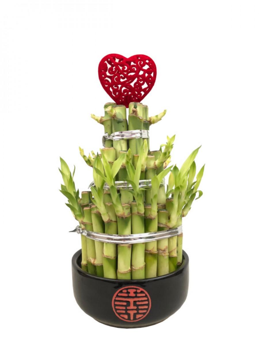 Bambú de la suerte con corazón