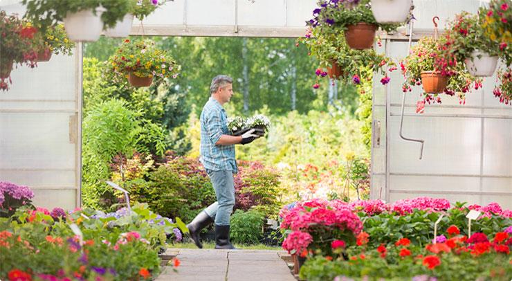 Viveros shangai madrid compra plantas y flores de interior for Como iniciar un vivero en casa