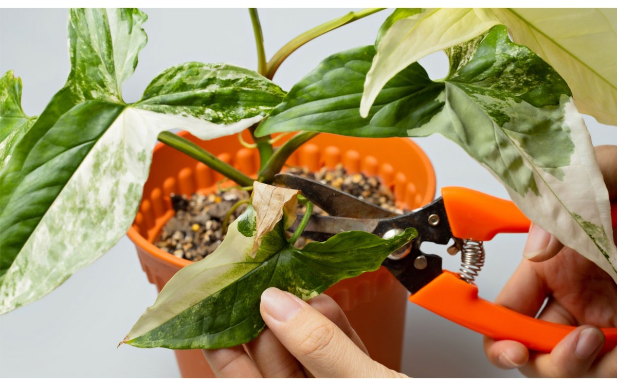 10 consejos para hacer la poda de tus plantas