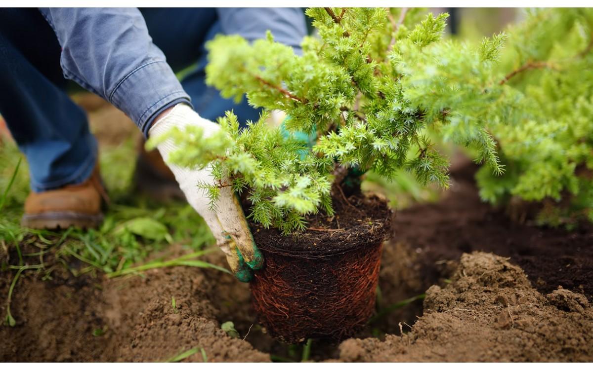 10 labores básicas de jardinería