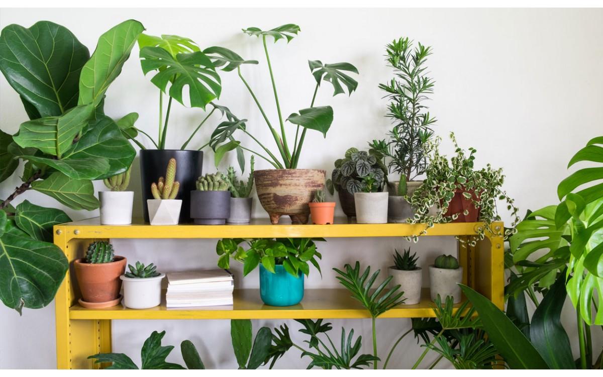 10 plantas de interior que necesitan pocos cuidados