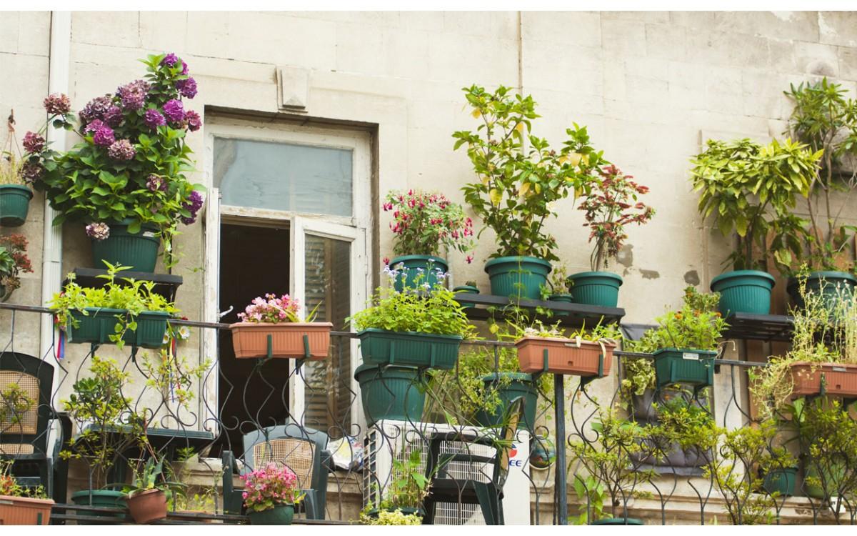 10 plantas que puedes colocar en tu terraza