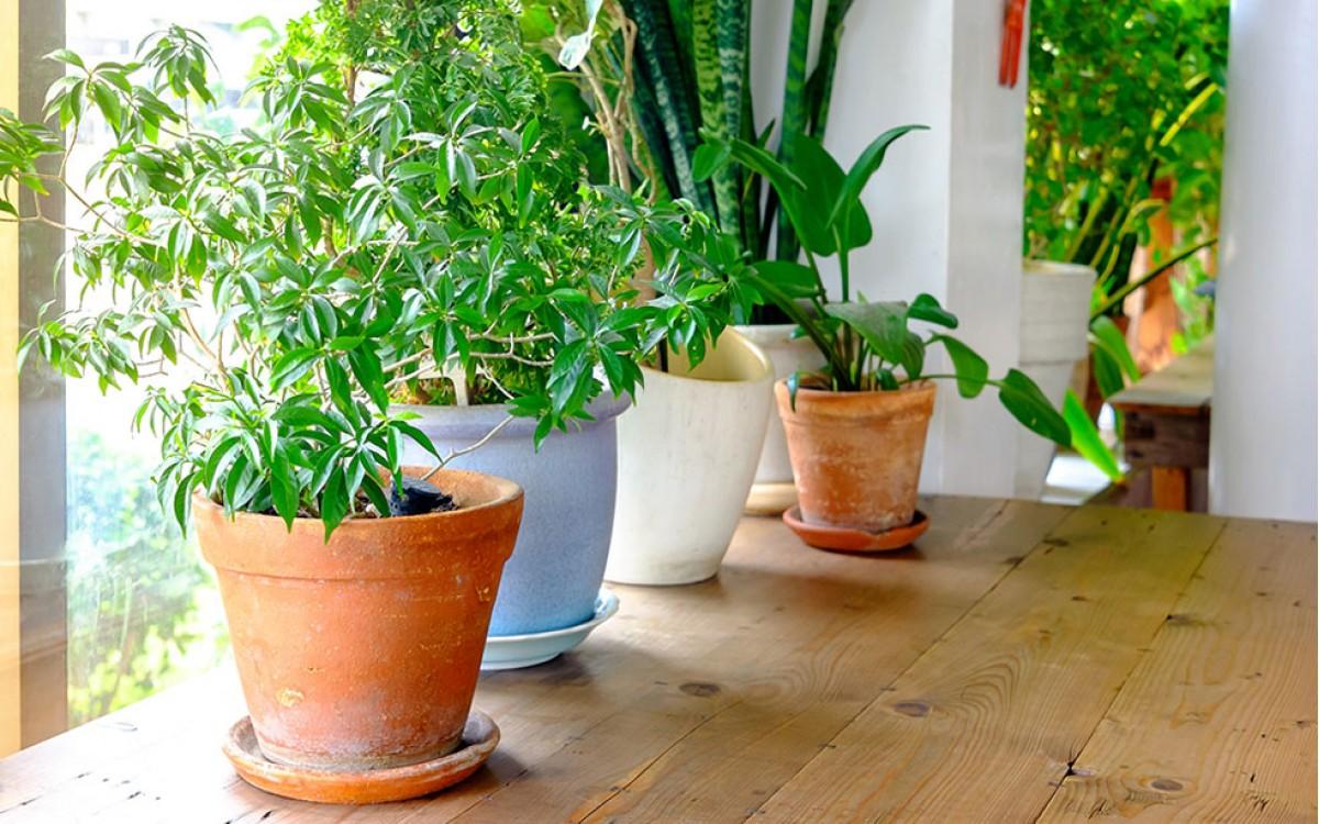 Alegría verde. Decora tu casa con plantas.