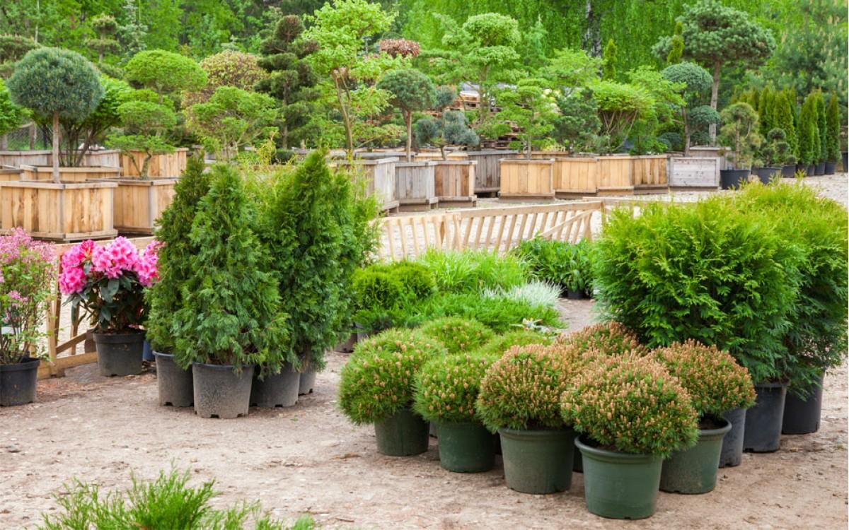 Comprar Plantas de Exterior