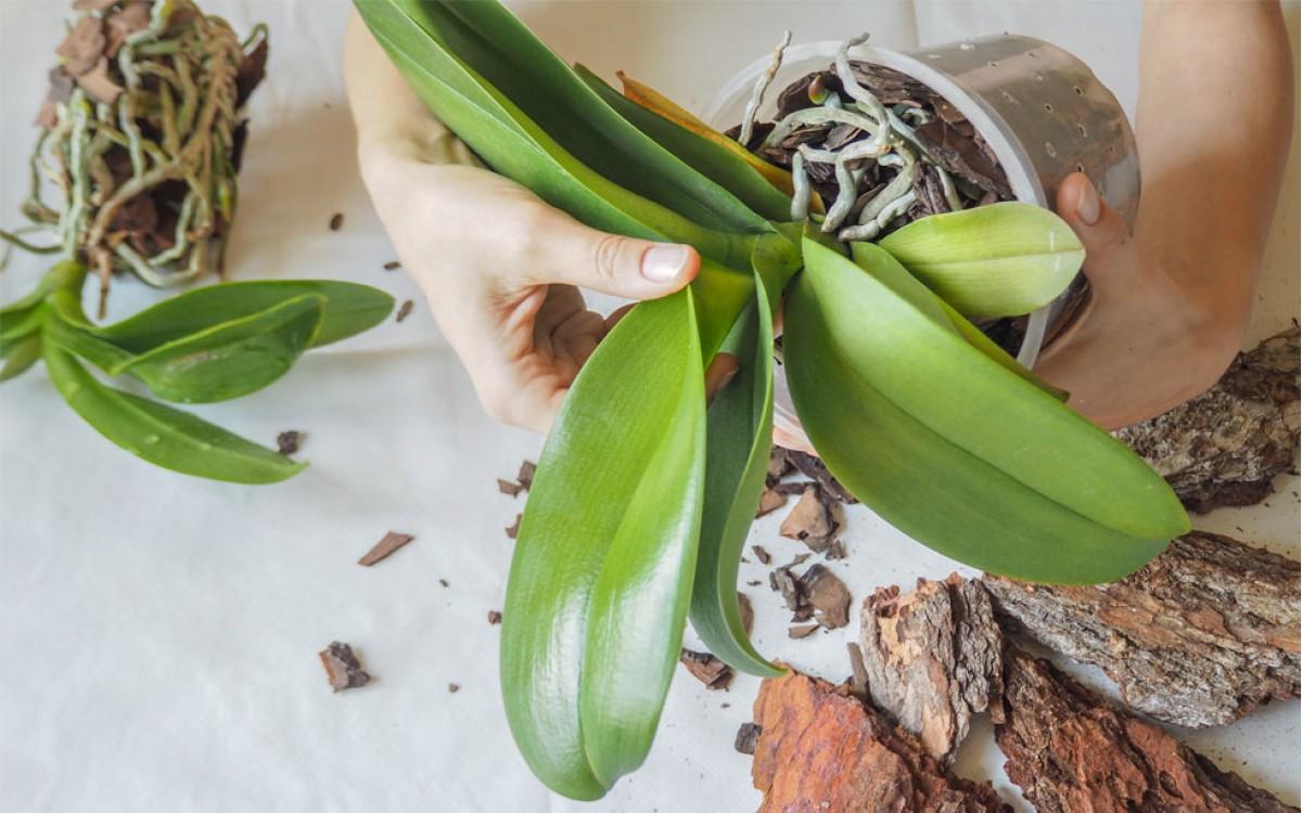 Conociendo el mundo de las orquídeas