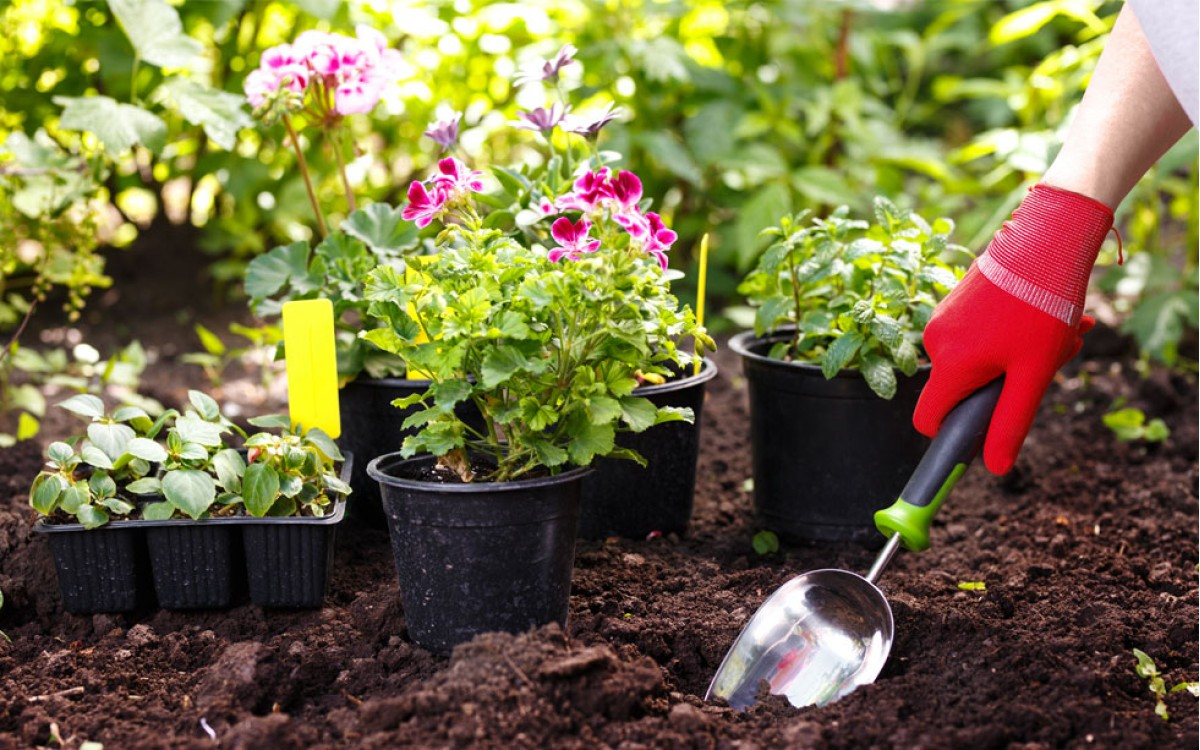 Conociendo las plantas de exterior
