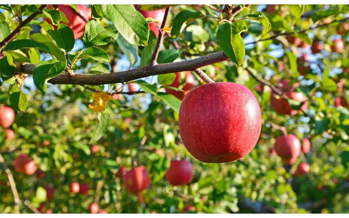 Frutos de naturaleza vegetal