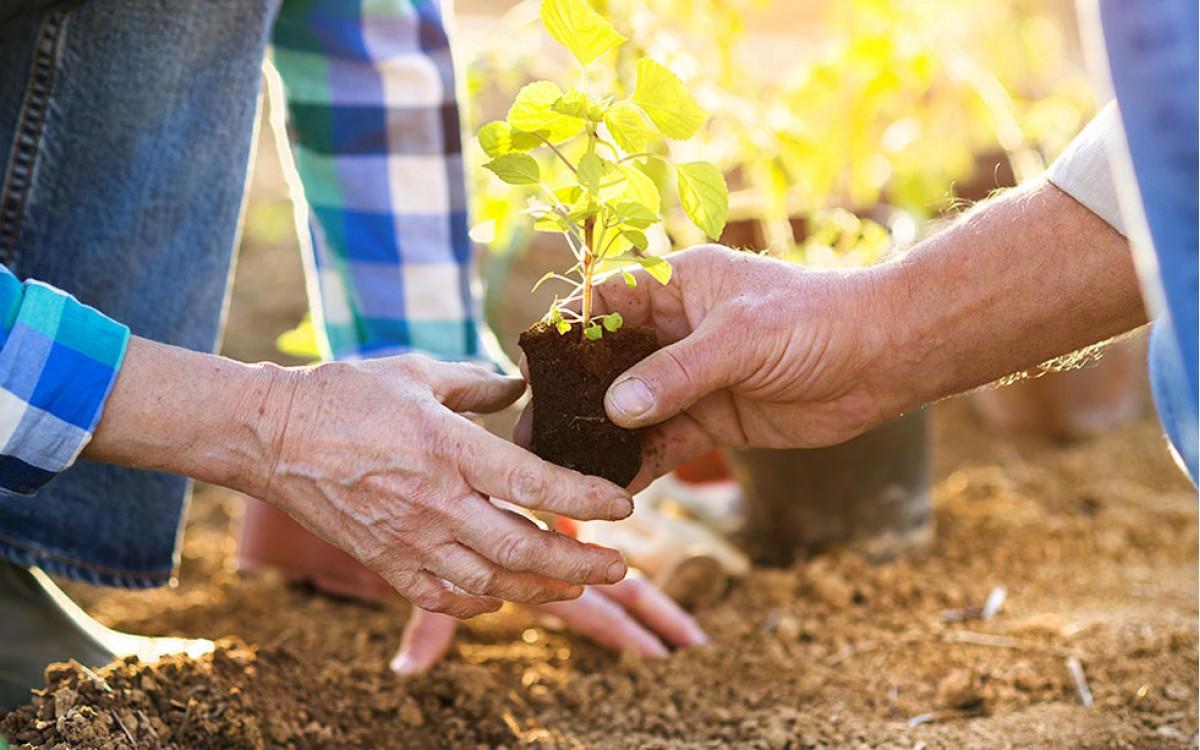 La Jardinería y la arthritis