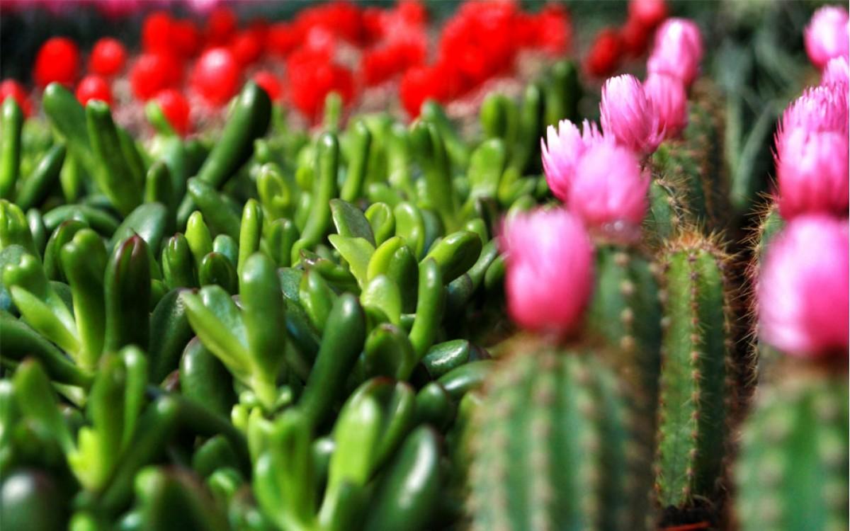 Los Cactus, las Crasas y sus cuidados