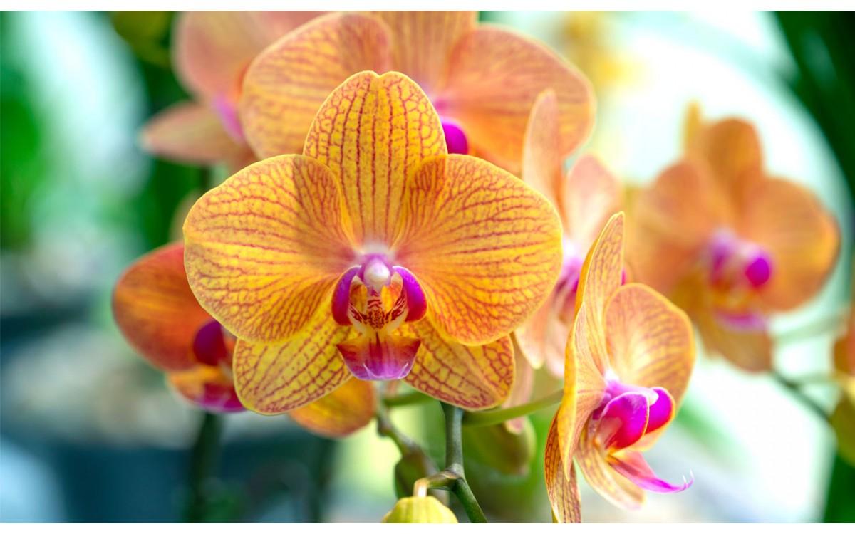 Los colores más exóticos de las orquídeas
