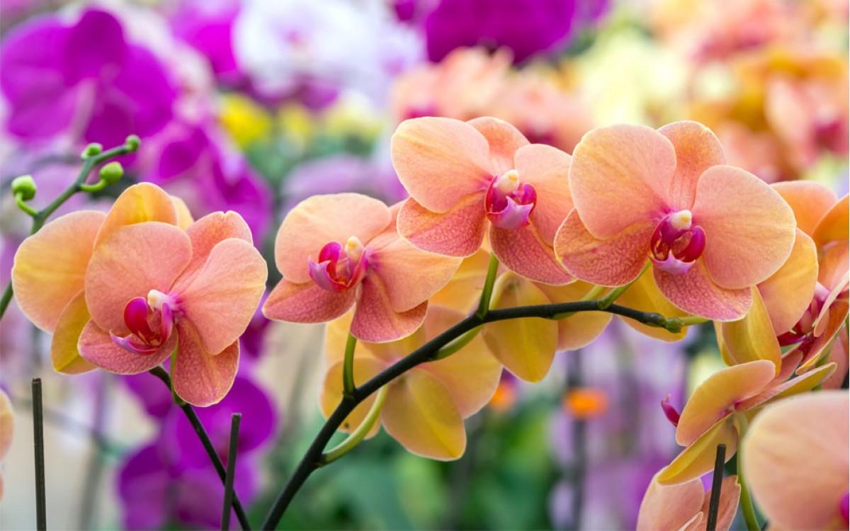Orquídeas hermoso y colorido regalo de la naturaleza