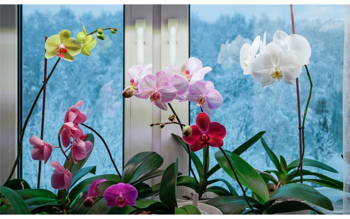 Plantas de interior con lindas flores